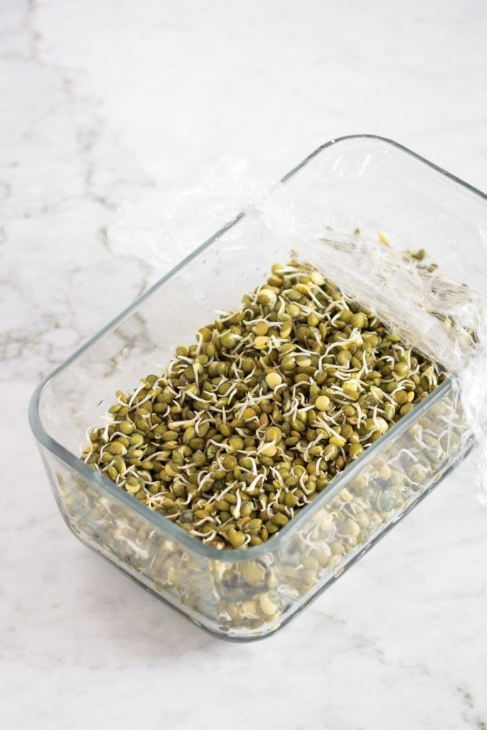 sprouted green lentils in a glass dish